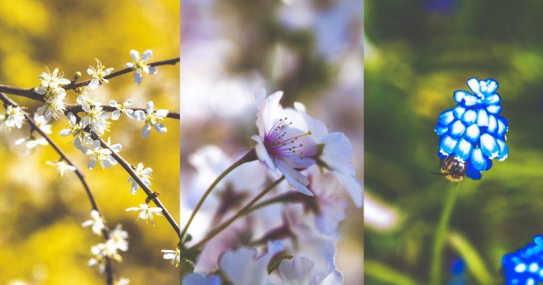Bloemen uit eigen tuin!